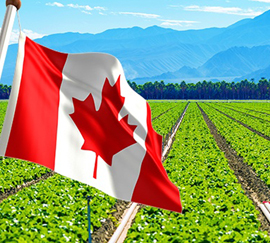 Immigration Lawyers in Edmonton - agri-food immigration pilot